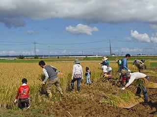 稲刈り2015-2