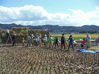 稲刈り2015-3
