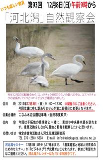 第93回自然観察会.jpg